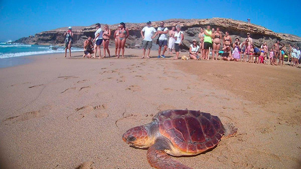 Fuerteventura suelta torguga jarugo 180825